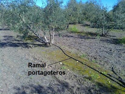 Resultado de imagen para riego localizado olivar
